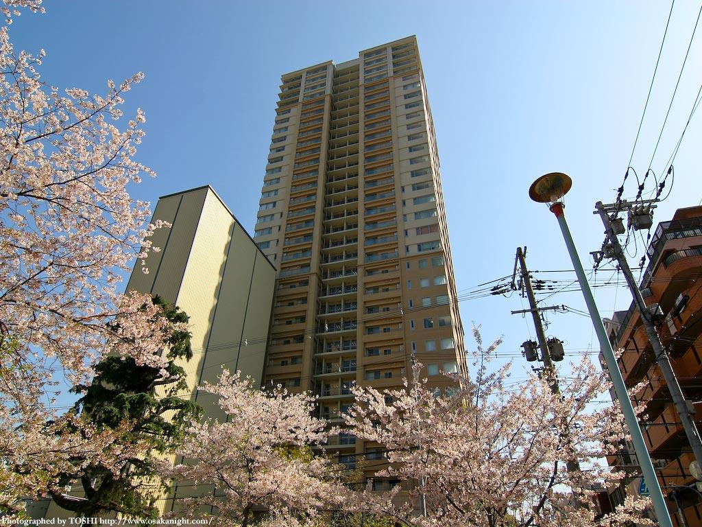 タワー・ザ・上町台